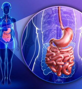 Científicos descubren nuevo órgano escondido en el cuerpo humano