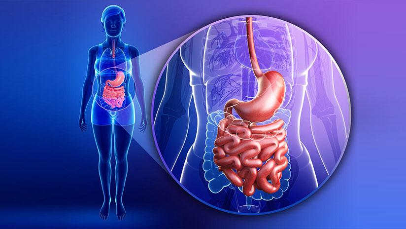 Científicos descubren nuevo órgano escondido en el cuerpo humano ...