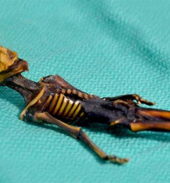 """Pruebas de ADN revelan detalles sorprendentes sobre el pequeño """"extraterrestre de Atacama"""""""