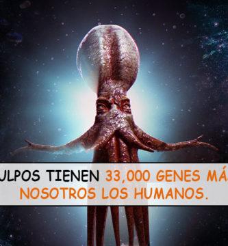 Científicos sugieren que los pulpos podrían ser extraterrestres