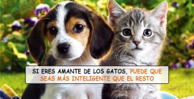 Personas que prefieren los gatos que los perros son más inteligentes