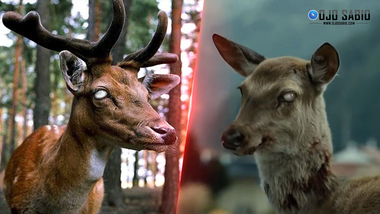 """Alarma en Estados Unidos por la enfermedad de el """"ciervo zombie"""""""