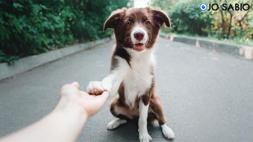 ¿Sabias que si tu perro te pone la pata encima, puede estar diciendo Te amo?